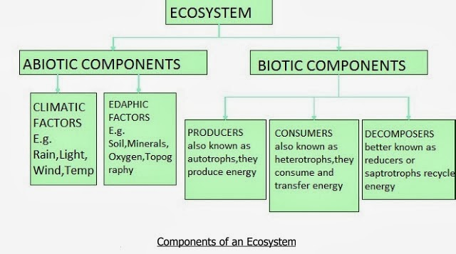 an abiotic component of the ecosystem is