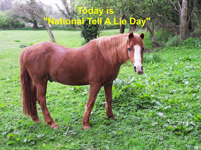 National Tell A Lie Day horse