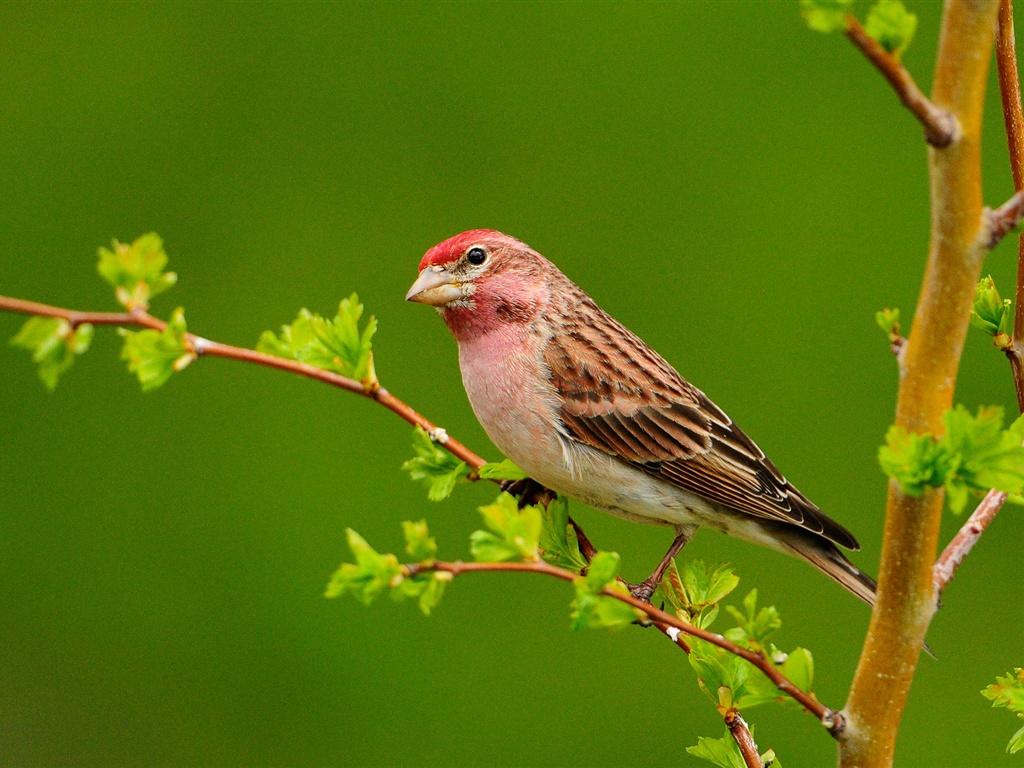 http://3.bp.blogspot.com/-OZTpGSK1gwc/T_BzpPy1SeI/AAAAAAAAw_U/JYM85mq7cng/s1600/Bird-on-the-branch-green-background_1024x768.jpg