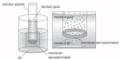 Proses osmosis