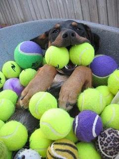 Hund und 100 Tennisbälle