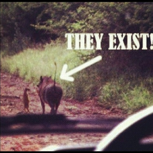 timon and pumba are real