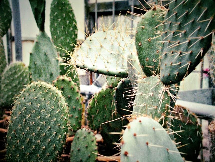 cactusi gradina botanica iasi