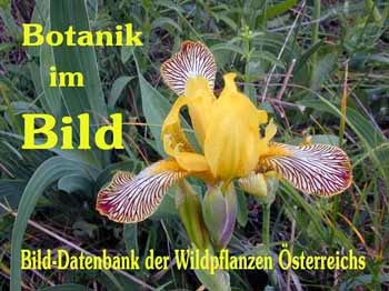 Empfehlenswerte Links zum Thema Botanik