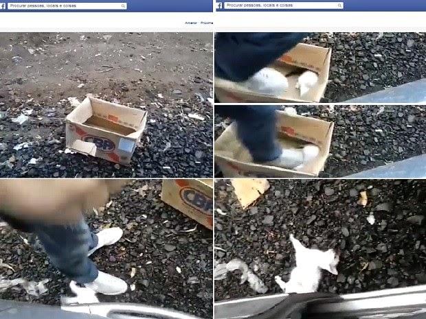 Sequência de imagens mostra homem pisando na cabeça do gato até matá-lo (Foto: Reprodução / Facebook)