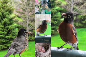 Heart Shape Robin's Nest