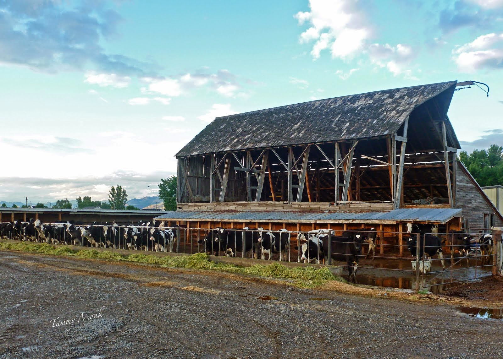 Our old barn