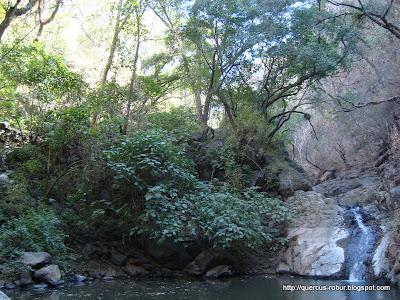 Pequeño tobogán en el cañón de Matatlán