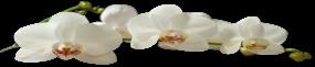 Orquideas Como Cuidar Para Florir