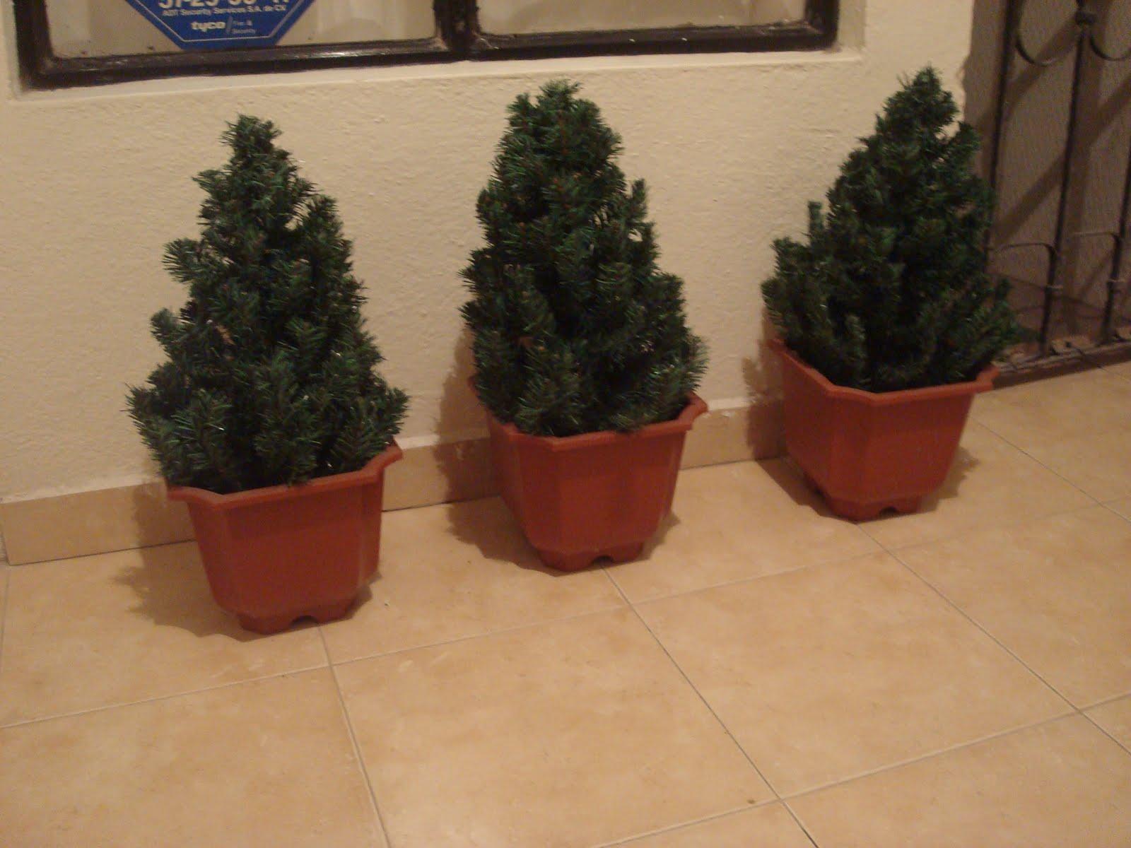 Manualidades de aurora hacer plantas artificiales for Tipos de pinos para jardin