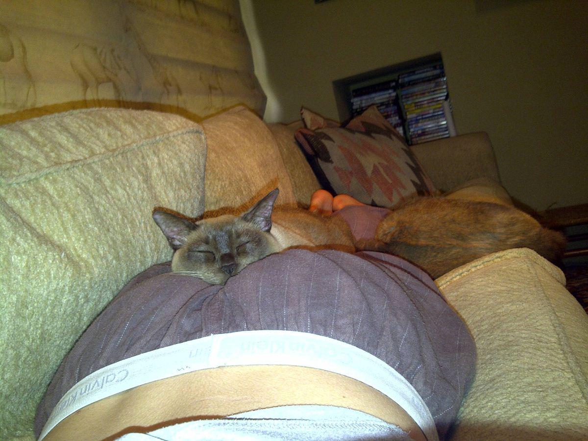 Интересная поза - прикольные коты 22-11-12