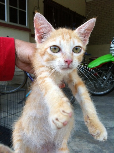 S C R A T C H Si Kenit Anak Kucing Kecacingan Chyno Radzi