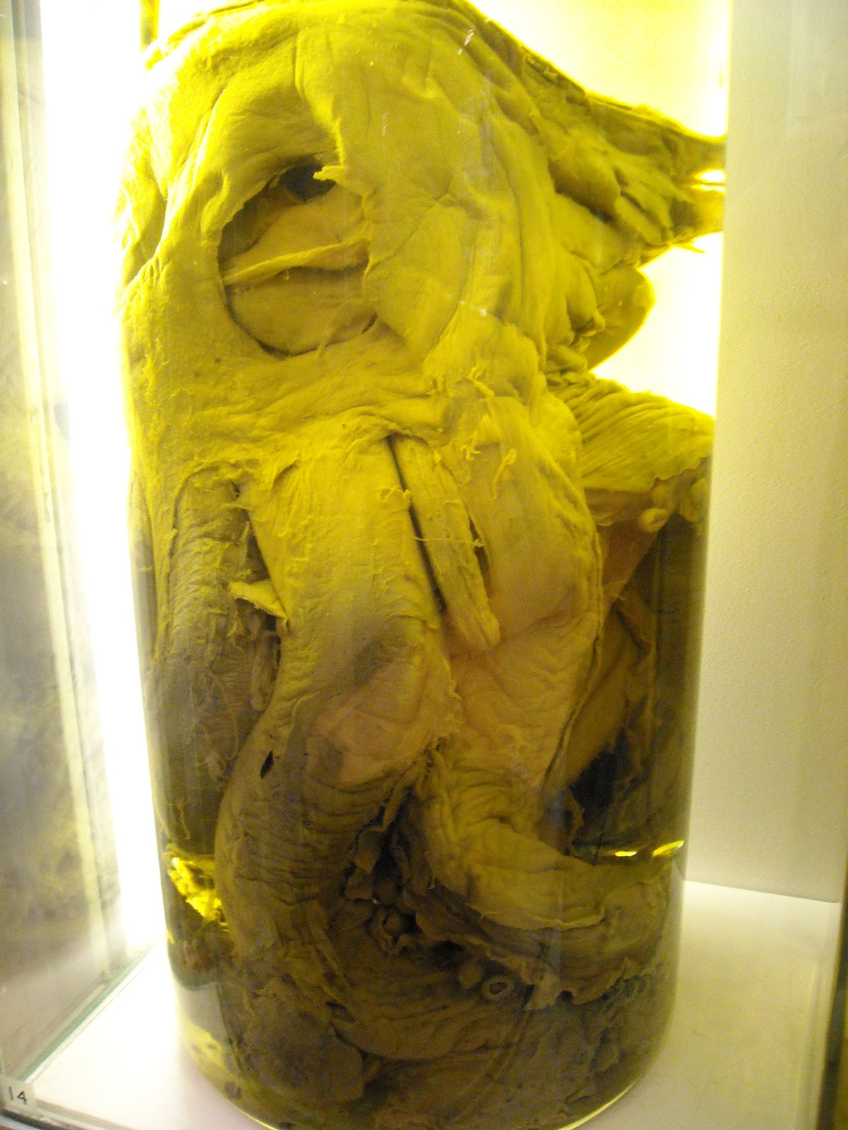 Giant Squid bits in a jar
