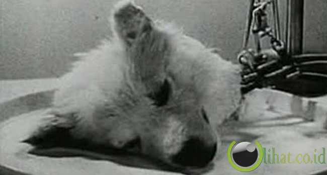 Sergei Bruyukhonenko (The Dog Decapitator)