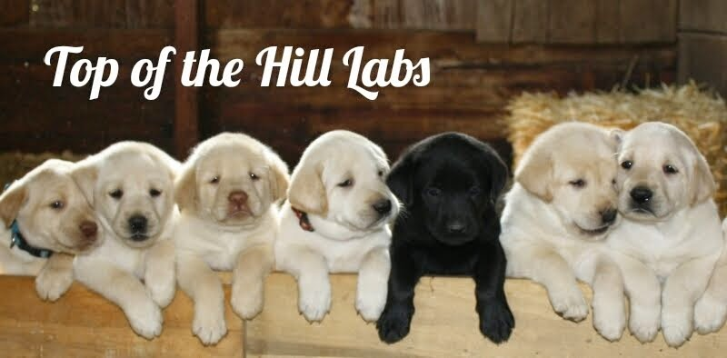 Top of the Hill Labs