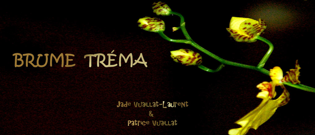 Les brumes tréma de Patrice et Jade Vuaillat (Laurent)