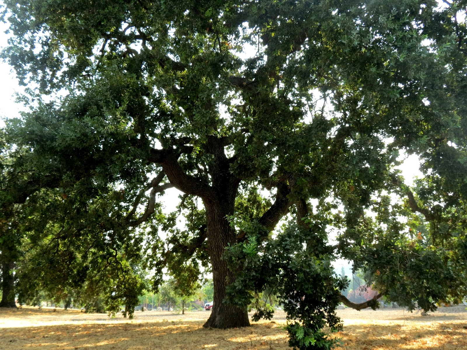tree give shade Smud partners with the sacramento tree foundation to provide free shade trees to plant around your home.
