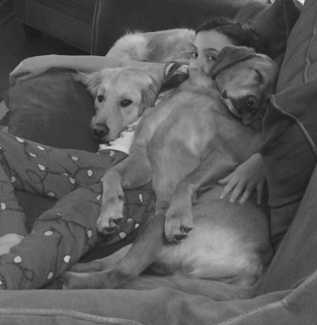 golden retriever dogs snuggles #blackandwhitesunday