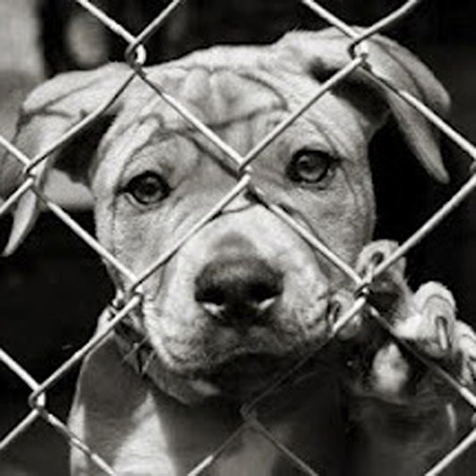 Sad Dogs And Cats In Cages