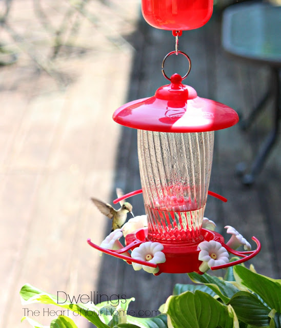 Hummingbird visiting the feeder.