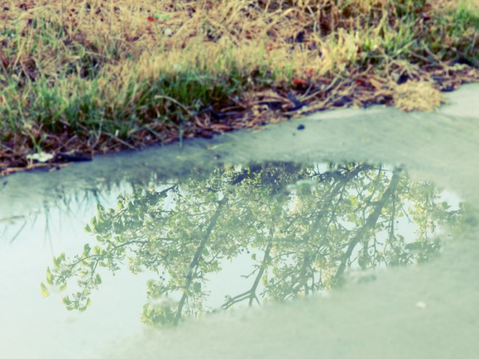 rain puddle reflection: growcreative
