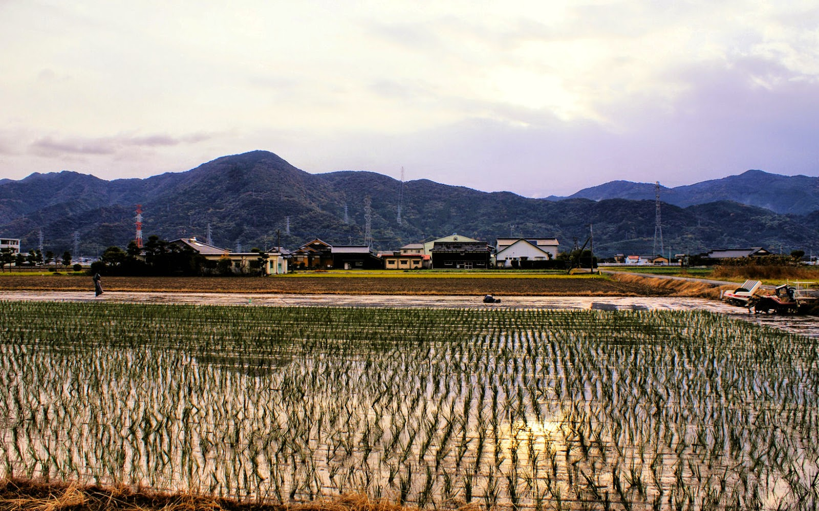 Flat paddy fields in Kumamoto in November.