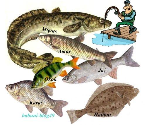 Polub ryby !