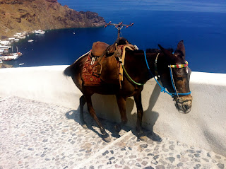 Greek islands SAntorini,donkey