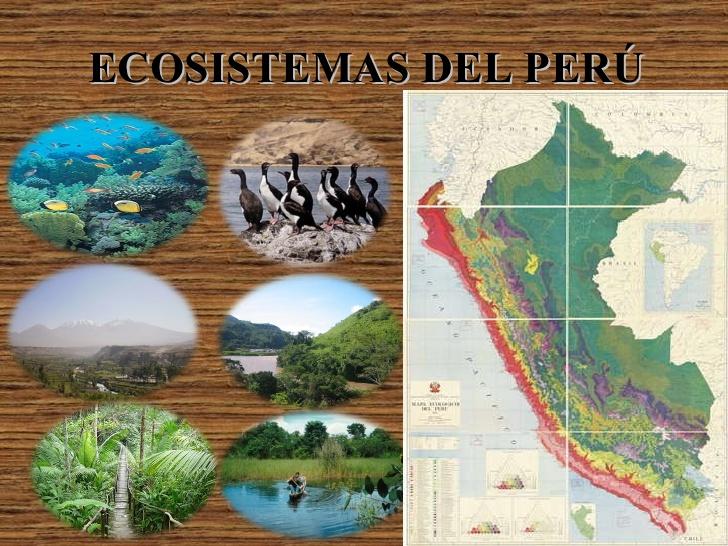 Resultado de imagen para ecosistema de perú