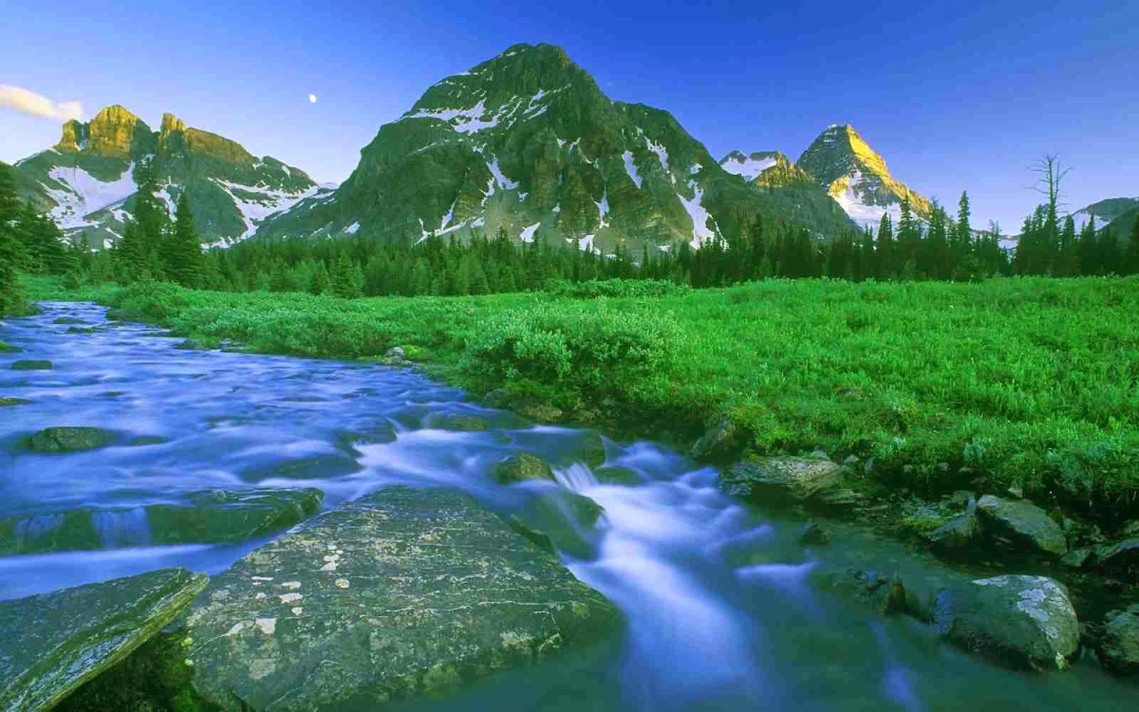 Waterflow Green Nature Widescreen HD Desktop Backgrounds Images Wallpapers