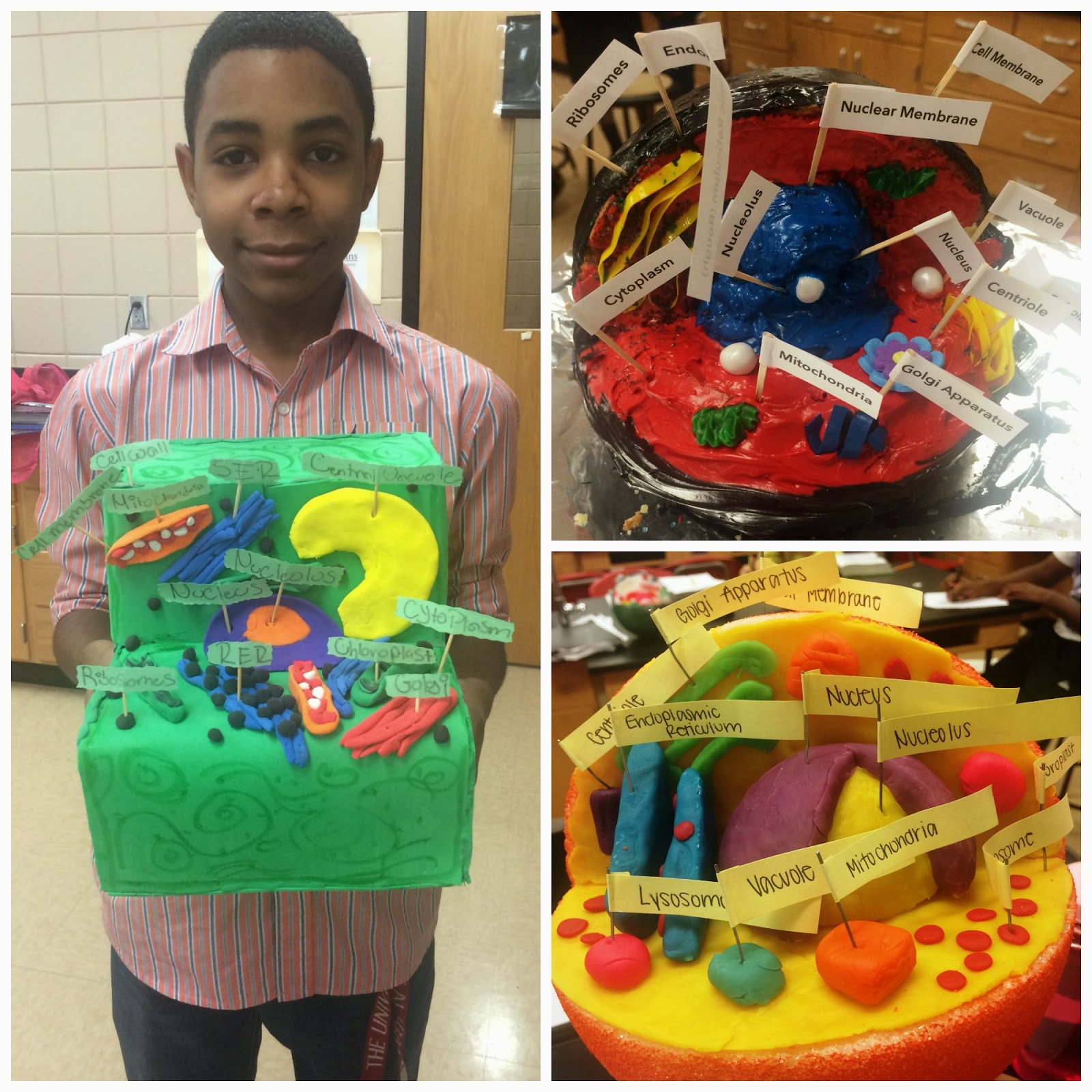 3d animal cell model project