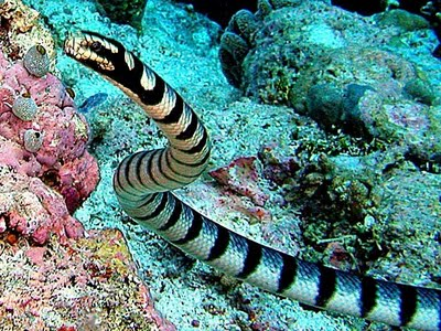 Serpente do Mar