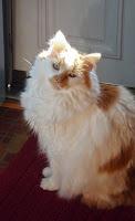 Henry sunning