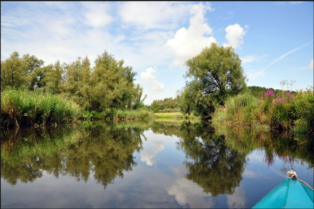 Biesbosch national park