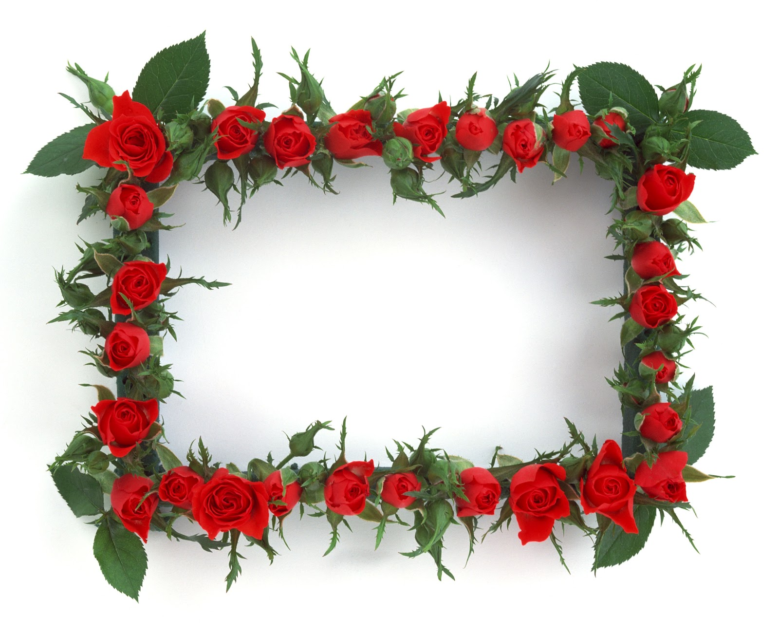 flower frames in all size hits all