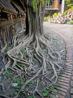 Tree roots at Shueili Snake Kiln in Taiwan