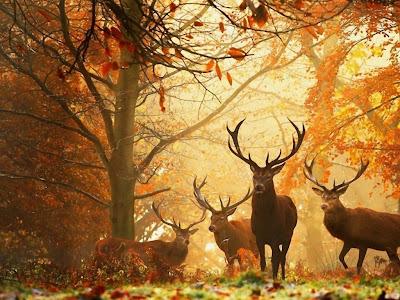 Autumn Season Standard Resolution Wallpaper 30
