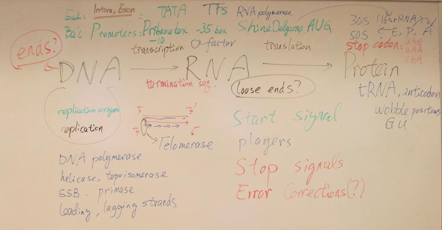 Molecular biology essay