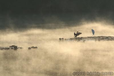 oiseau cormorant grande aigrette héron silhouette étang nature Sorques Fontainebleau Seine et Marne