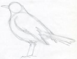 Uccellino Da Disegnare Disegni Facili Da Disegnare Di Animali