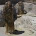 Το Απολιθωμένο Δάσος Λέσβου υποψήφιο Μνημείο Παγκόσμιας Κληρονομιάς της UNESCO