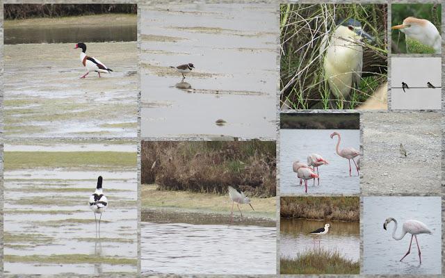 Birds of Languedoc including shelducks, egrets, herons, black-necked stilts