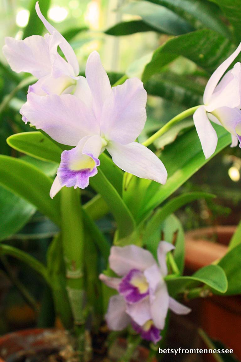 how to grow orchids inside