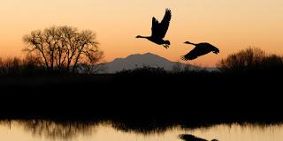 Desa Misterius Ini Tempat Puluhan Burung Bunuh Diri