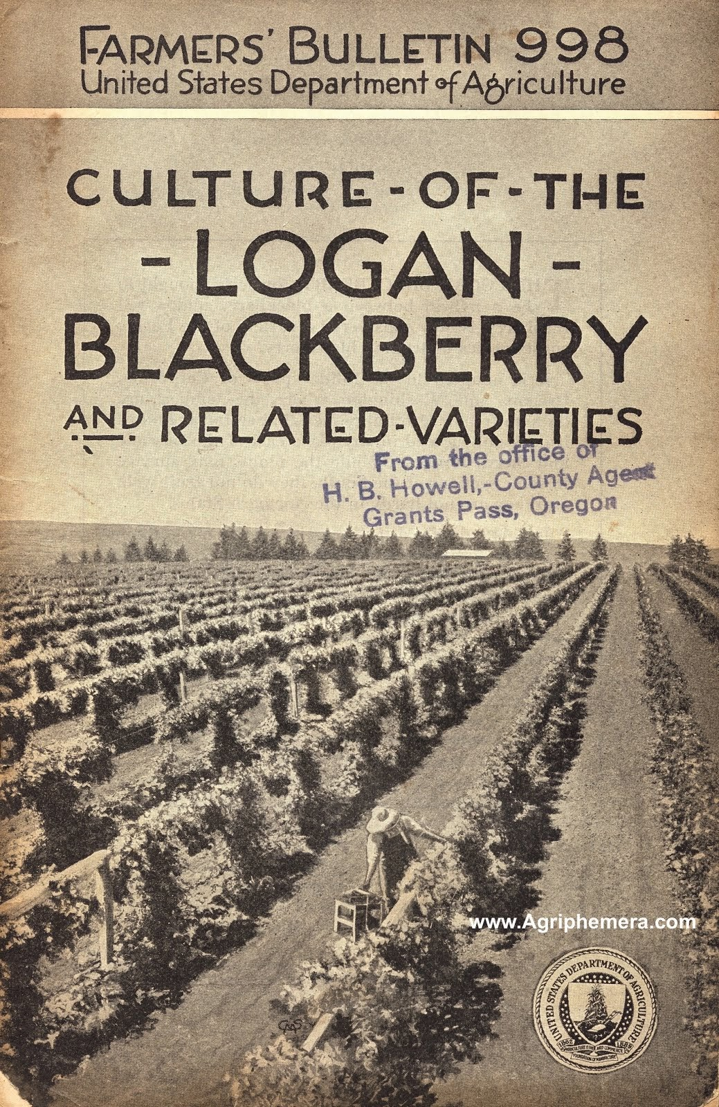 Culture Of The Logan Blackberry (1921)