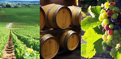 vino burdeos