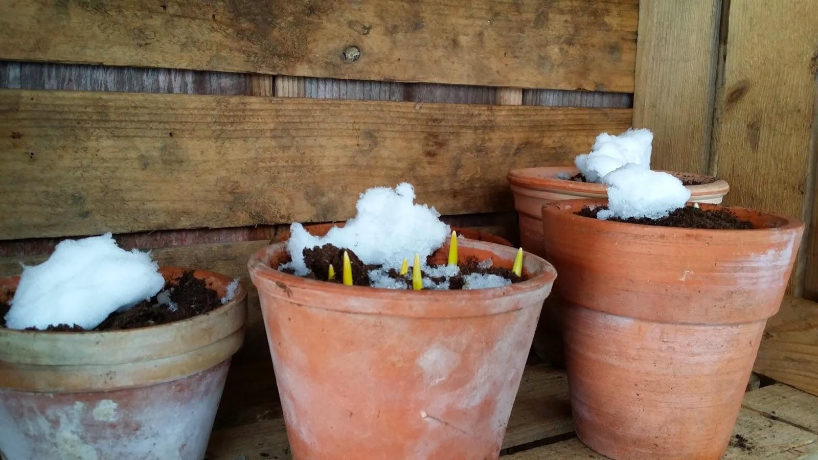 Cesars trädgårdsblogg