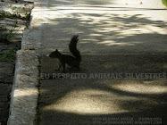EU RESPEITO ANIMAIS SILVESTRES