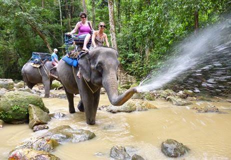 Elephant Trekking Samui Namung Jungle Trip : Samui Elephant Trekking Camp at Namuang Waterfall No.1