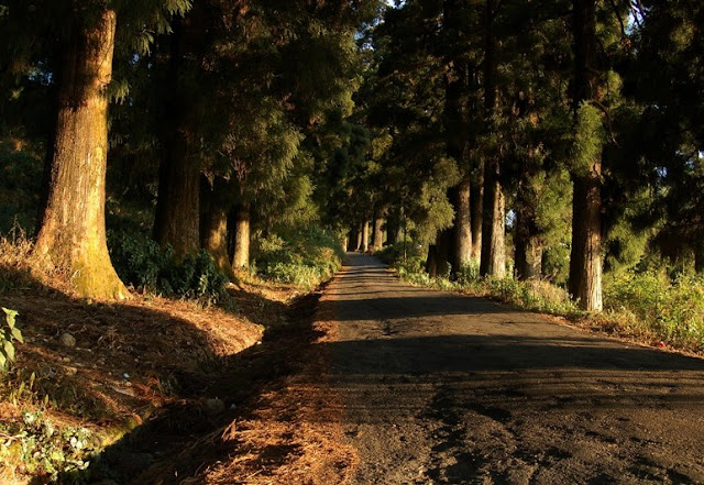 Dow Hills West Bengal